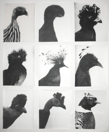 Jochen Lempert, german, photographer, photography, animals, birds, repetitive, repetition, black, white