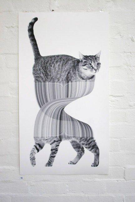 jonathan zawada, cat, illustration