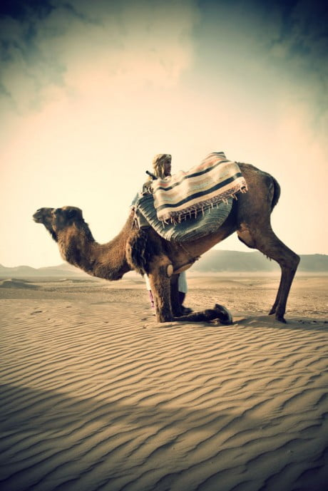 vintage, marrakech, jawhar, photography, michele turriani, culture, morroco, luxury hotel, residences, spa, gallery, museum, King of Morocco, commemorative, architecture, people, native, pattern, decoration, walls, luxury, camel