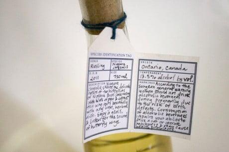 melissa deckert, niagra chrysalis, wine label, wine bottle, packaging, wine packaging, butterfly, illustrated packaging, illustrated label, chrysalis