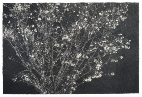 'THE YOUNG TREE', CHARCOAL ON ARCHES PAPER, 51 X 76CM, sarah gillespie, drawing, painting