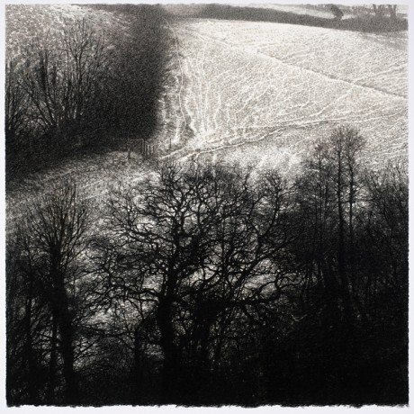 'OAKS AND LIGHT SNOW', CHARCHOAL ON PAPER, 66 X 69CM, sarah gillespie, drawing, painting