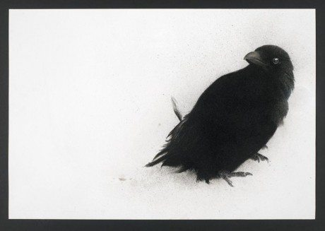 'MY HEART A WOUNDED CROW', MEZZOTINT ON HANDMADE AQUARI PAPER, ED.20, 39 X 54CM, sarah gillespie, drawing, painting