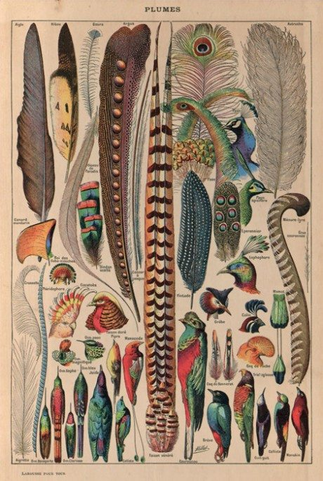 feathers, plumes