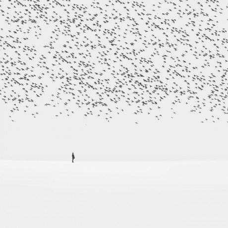 Hossein Zare, regret, photography, black & white, birds, landscape