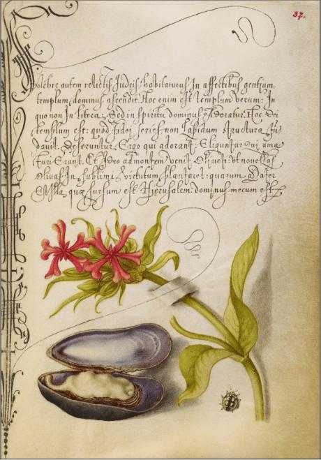 illuminated manuscript, calligraphy, Joris Hoefnagel, Georg Bocskay, illumination, 1591 - 1596, script, 1561 - 1562, watercolour, gold, silver, paint, ink, parchment