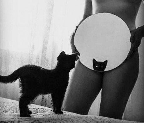 feline friday, cat, pussy, sexy, mirror, kitten