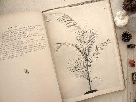 Plantes & Fleurs, 1906, Emile Bayard, illustration, Les Miserables, book, monograph, flowers, photography