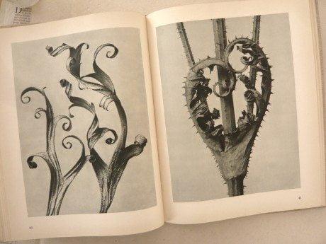 Urformen Der Kunst, Karl Blossfeldt, 1935, antique book, collectible book, photography, monograph, flowers, nature, form